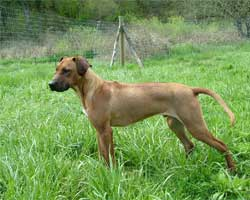 Chamba at ApacheRidge Ranch | Love Your Ridgeback