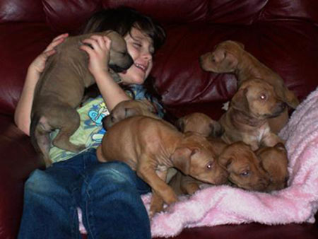 Sweet Rhodesian Ridgeback Puppies at ApacheRidge Ranch